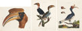 Antiques:Posters & Prints, George Edwards. Three Buceros Prints. Three hand-colored engravings from John Wilkes' Encyclopaedia Londinensis. All ver... (Total: 3 Items)