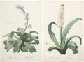 Antiques:Posters & Prints, Pierre-Joseph Redouté. Two Prints: Eucomis Punctata. [and:] AletrisFragrans. Two stipple engravings with hand-coloring,... (Total: 2Items)
