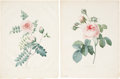Antiques:Posters & Prints, Pierre Joseph Redouté (1759-1840). Six Rose Prints: Mycrophylla (Rose). [and:] Centfeuille Cristata. [and:] Thé blanc ... (Total: 6 Items)