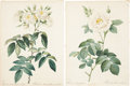 Antiques:Posters & Prints, Pierre Joseph Redouté. Four Rose Prints. Four hand-colored stippleengravings from Les Roses. All are in very good c... (Total:4 Items)