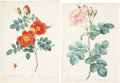 Antiques:Posters & Prints, Pierre Joseph Redouté. Four Rose Prints. Four hand-colored stippleengravings from Les Roses. All are in very good condi...(Total: 4 Items)