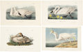 Antiques:Posters & Prints, John James Audubon. Heron Print and Three Swan Prints (Octavo Edition). Four hand-colored engravings from The Birds of Ame... (Total: 4 Items)
