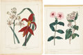 Antiques:Posters & Prints, Sydenham Teast Edwards. Five Botanical Prints. Five hand-colored engravings, circa 1805-1809. All in very good condition... (Total: 5 Items)