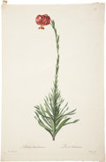Antiques:Posters & Prints, Pierre-Joseph Redouté (1759-1840). Lilium Chalcedonicum.. A wonderful stipple engraving with hand-coloring, from Les Lil...