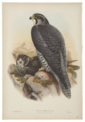 Antiques:Posters & Prints, John Gould (1804-1881). Two Prints: Falco Gyrfalco. [and:] MilvusMigrans.. A pair of stately hand-colored lithographs... (Total: 2Items)
