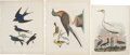 Antiques:Posters & Prints, Alexander Wilson. Three Prints: Barn Swallow. [and:] Pigeon and Warbler. [and:] Hooping Crane. Three hand-colored en... (Total: 3 Items)