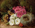 Fine Art - Painting, European:Antique  (Pre 1900), GEORGE CLARE (British, 1830-1900). Primulas and a Bird's Nest ona Mossy Bank. Oil on canvas. 8 x 10 inches (20.3 x 25....