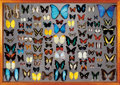 Zoology:Mounted Insects, LARGE TROPICAL BUTTERFLY DISPLAY CASE. ...