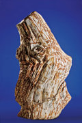Fossils:Paleobotany (Plants), PETRIFIED TREE TRUNK. ...
