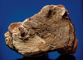 Fossils:Dinosauria, EXTREMELY RARE DINOSAUR SKIN IMPRESSION ON BONE-FILLED MATRIX. ...