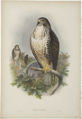 Antiques:Posters & Prints, John Gould (1804-1881). Two Prints: Buteo Vulgaris. [and:] Pernis Apivorus.. A pair of impressive hand-colored lithogr... (Total: 2 Items)