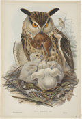 Antiques:Posters & Prints, John Gould (1804-1881). Bubo Maximus.. A hand-colored lithograph ofthe imperious Eagle Owl from Gould's Birds of Great ...