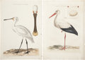 Antiques:Posters & Prints, Cornelius Nozeman. Two Prints: Platalea, Leucorodia. [and:] ArdeaCiconia. Two hand-colored engravings from Nederlands... (Total:2 Items)
