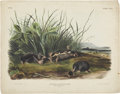 Antiques:Posters & Prints, John James Audubon. Scalops Townsendii - Plate CXLV (BowenEdition). Hand-colored lithograph dated 1848, from the imperialf...