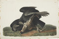 Antiques:Posters & Prints, John James Audubon (1785-1851). Black Vulture or Carrion Crow -Plate CVI (Havell Edition).. A dramatic hand-colored aquat...