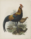Antiques:Posters & Prints, Daniel Giraud Elliot (1835-1915). Gallus Ferrugineus.. A fantastichand-colored lithograph from Elliot's Monograph of th...