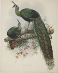 Antiques:Posters & Prints, Daniel Giraud Elliot (1835-1915). Pavo Muticus.. A striking andbeautiful hand-colored lithograph from Elliot's Monogra...