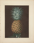 Antiques:Posters & Prints, George Brookshaw (1751-1823). Black Jamaica - Plate XL.. An absolutely superb aquatint engraving of a pineapple, with some...