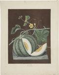 Antiques:Posters & Prints, George Brookshaw (1751-1823). White Candia - Plate LXXI.. A lovely aquatint engraving of a melon, with some hand-coloring,...