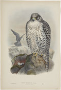 Antiques:Posters & Prints, John Gould (1804-1881). Two Prints: Falco Islandus (Adult). [and:]Falco Islandus (Young).. A pair of wonderful hand-c... (Total: 2Items)