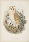 Antiques:Posters & Prints, John Gould (1804-1881). Four Owl Prints.. Four extremely charming hand-colored lithographs from Gould's Birds of Great B... (Total: 4 Items)