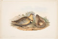 Antiques:Posters & Prints, John Gould. Pterocles Fasciatus. Hand-colored lithograph from Gould's Birds of Asia. Very good....