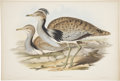Antiques:Posters & Prints, John Gould (1804-1881). Two Prints: Otis Macqueeni. [and:] LittleBustard.... (Total: 2 Items)