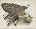 Antiques:Posters & Prints, Daniel Giraud Elliot (1835-1915). Argusianus Grayii.. A magnificenthand-colored lithograph from Elliot's Monograph of t...
