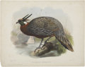 Antiques:Posters & Prints, Daniel Giraud Elliot (1835-1915). Pucrasia Duvauceli.. Hand-colored lithograph from Elliot's Monograph of the Phasianida...