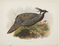 Antiques:Posters & Prints, Daniel Giraud Elliot (1835-1915). Pucrasia Macrolopha.. A lovelyhand-colored lithograph from Elliot's Monograph of the ...