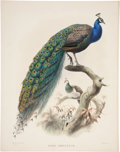 Antiques:Posters & Prints, Daniel Giraud Elliot (1835-1915). Pavo Cristatus.. An absolutelystunning hand-colored lithograph from Elliot's Monograp...