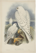 Antiques:Posters & Prints, John Gould (1804-1881). Falco Candicans.. A hand-colored lithograph of the Greenland Falcon (light race, adult and young) ...