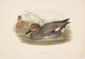 Antiques:Posters & Prints, John Gould. Two Water Bird Prints, including: ChaulelasmusStrepera. [and:] Uria Carbo. Both generally very good.... (Total: 2Items)