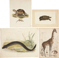 Antiques:Posters & Prints, Eight Natural History Prints by Artists including: J. Pass. [and:]R. P. Nodder. [and:] George Edwards (attributed t... (Total: 8Items)