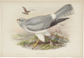 Antiques:Posters & Prints, John Gould (1804-1881). Two Prints: Circus Cyaneus. [and:] CircusCineraceus.. A pair of beautiful hand-colored lithog... (Total: 2Items)