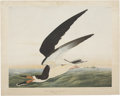 Antiques:Posters & Prints, John James Audubon. Black Skimmer or Shearwater - Plate 248 (Bien Edition). Chromolithograph, dated 1860. Very good conditio...