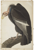 Antiques:Posters & Prints, John James Audubon (1785-1851). California Vulture - Plate CCCCXXVI (Havell Edition)....