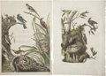 Antiques:Posters & Prints, Cornelius Nozeman (1721-1786). Four Prints: Title page,Nederlandsche Vogelen. [and:] Certhia. [and:] Chlo...(Total: 4 Items)