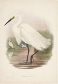 Antiques:Posters & Prints, John Gould. Herodias Garzetta. Hand-colored lithograph from Gould's Birds of Great Britain. Very good....
