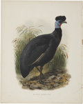 Antiques:Posters & Prints, Daniel Giraud Elliot (1835-1915). Two Prints: Lophophorus L'Huysh.[and:] Numida Verreauxii.. A pair of striking hand-... (Total: 2Items)