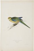 Antiques:Posters & Prints, Edward Lear. Platycercus Stanleyii. Hand-colored lithograph fromLear's Parrots. In excellent condition....