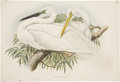 Antiques:Posters & Prints, John Gould (1804-1881). Herodias Alba.. Hand-colored lithograph from Gould's Birds of Great Britain (London: 1862-1873...