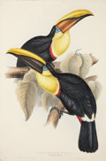 Antiques:Posters & Prints, John Gould (1804-1881). Ramphastos Swainsonii....