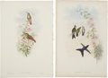 Antiques:Posters & Prints, John Gould (1804-1881). Two Prints: Amazilla Pristina. [and:] Ramphomicron Microrhyncha.. A pair of delightful hand-co... (Total: 2 Items)