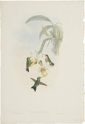Antiques:Posters & Prints, John Gould (1804-1881). Chlorostilbon Atala.. A lovely and delicate hand-colored lithograph with iridescent highlights fro...