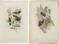 Antiques:Posters & Prints, John Gould (1804-1881). Two Prints: Ramphomicron Herrani. [and:]Dorifera Ludovicle.. A pair of lovely hand-colored li... (Total: 2Items)
