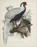 Antiques:Posters & Prints, Daniel Giraud Elliot (1835-1915). Euplocomus Nycthemerus.. A striking hand-colored lithograph from Elliot's Mono...