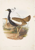 Antiques:Posters & Prints, John Gould. Sypheotides Auritus. Hand-colored lithograph from Gould's Birds of Asia. Very good....