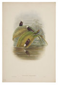 Antiques:Posters & Prints, John Gould (1804-1881). Microchera Parvirostris.. A charming hand-colored lithograph from Gould's Monograph of the Troch...