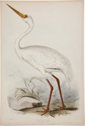 Antiques:Posters & Prints, Edward Lear. White Crane. Hand-colored lithograph from Gould's Birds of Europe. Very good....